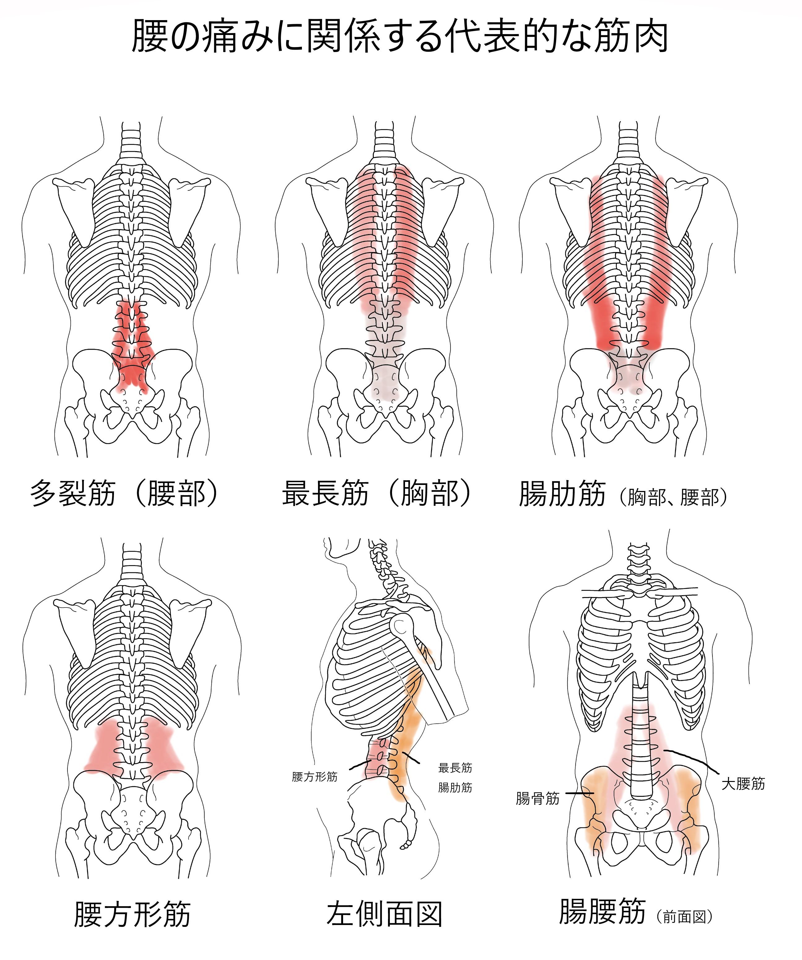 と 背中 痛み 左 胸 の